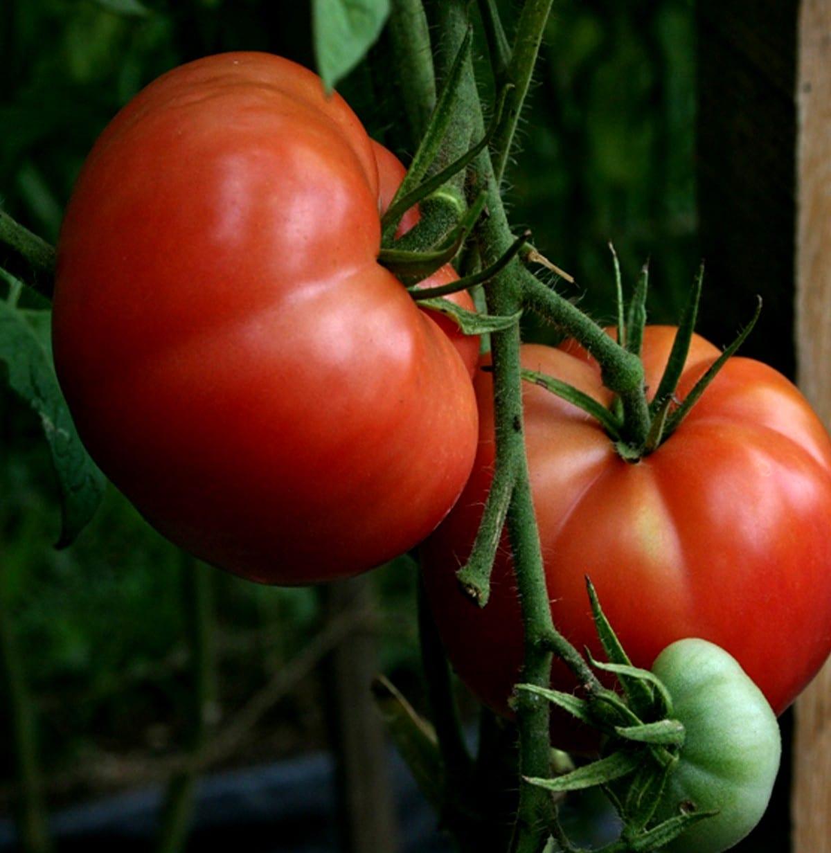 Big Boy Tomato